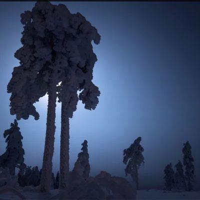 Lumiset puut hämärässä.