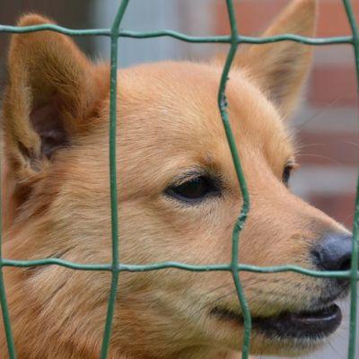 Koira verkon takana.