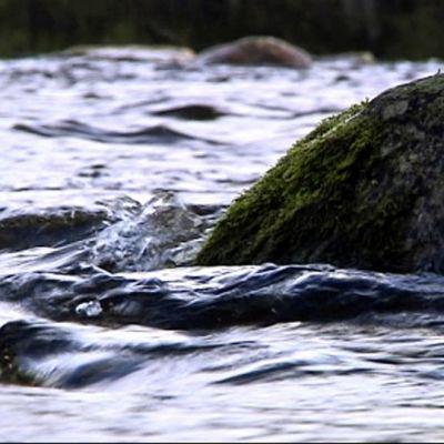 Sammaloitunut kivi joessa, jokimaisema.