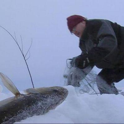 Kalastaja Petri Kinnunen kokee verkkoa Höytiäisellä.