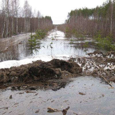 Tulva keväisessä metsässä.