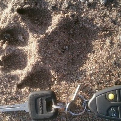 Kuvassa hiekassa oleva käpälän jälki ja auton avaimet.