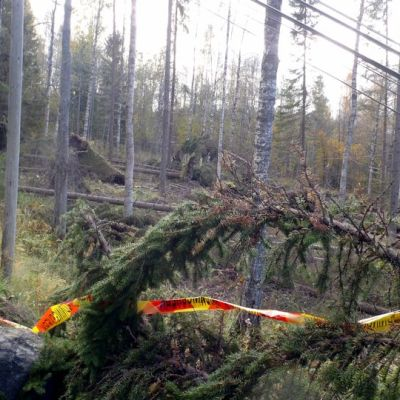 Valio-myrskyn kaatamia puita Ukko-Kolille nousevan tien varressa.