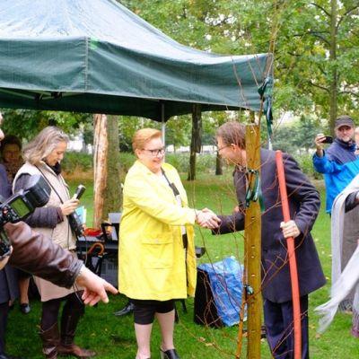 Komission varapuheenjohtaja Jyrki Katainen kättelee europarlamentaarikko Sirpa Pietikäistä onnistuneen koivun istuttamisen jälkeen.