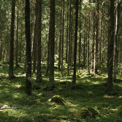 Seitsemän lammin suon maastoa Hämeenlinnan Rengossa