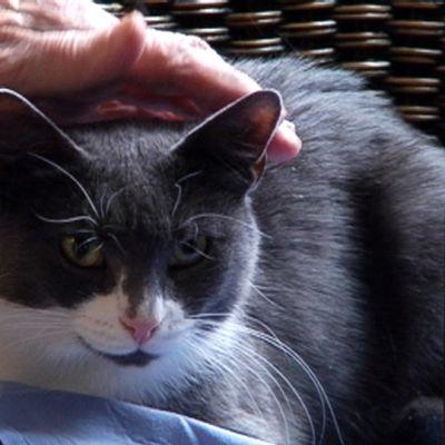 Vanhus silittää Hanna-kissaa