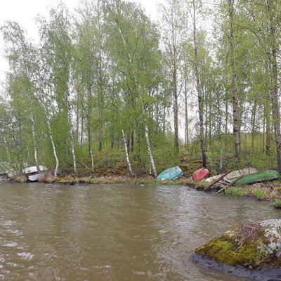 Lammasniemen alue järveltä katsottuna