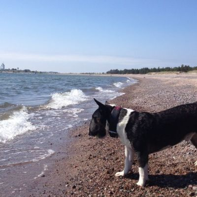 Tulliniemen ranta on ennestään muun muassa koiranulkoiluttajien suosiossa.