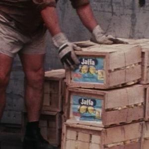 mies pakkaa appelsiinejä.