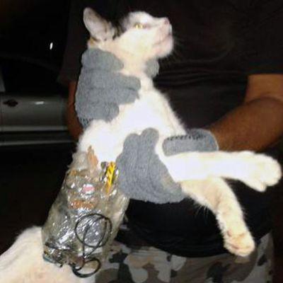 Brasilialaisvankilan portin yli hypänneen kissan turkkiin oli kiedottu teipin avulla mm. saha ja kännykkä.