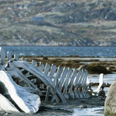 Andrei Zvjagintsevin elokuva Leviathan tapahtuu Barentsinmeren rannikon jylhissä maisemissa, jotka vain korostavat pohjoisen moraliteetin ankaruutta.