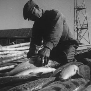Kalastaja perkaa lohta.