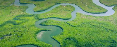 Amazonas regnskog fotograferad ovanifrån i Brasilien.