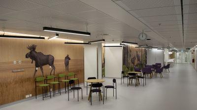 Lång korridor kantad av konst som föreställer älgar i det nya Fyrsjukhuset.