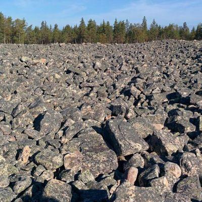 """Lauhanvuoren kansallispuistossa sijaitsee näyttävä """"pirunpelto"""" eli jääkauden rantamuodostelma."""