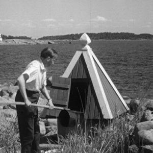 Mies nostaa vettä kaivosta Haapasaaressa 1964