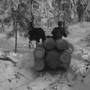 Hevonen ja ajuri kuljettavat puutavaraa vuonna 1964.