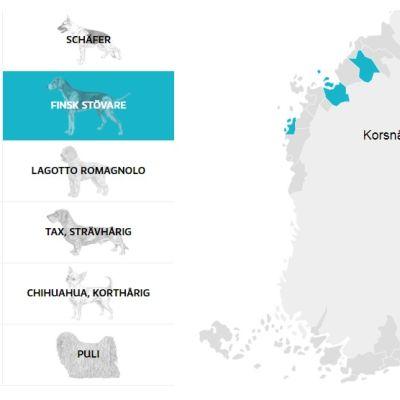 En karta som visar i vilka kommuner olika hundraser är populärast.