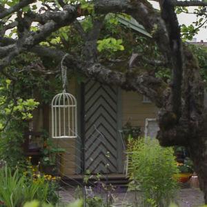 Lummig trädgård med knöligt äppelträd. Längst in skymtar liten gulmålad stuga med grön dörr.