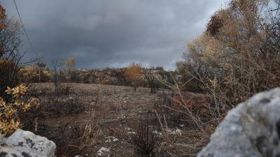 Bränt landskap efter sommarens många och extremt utbredda bränder på Sicilien.