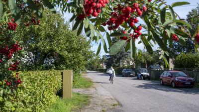 En person cyklar fram längs en lugn väg kantad av småhus i Borgå.