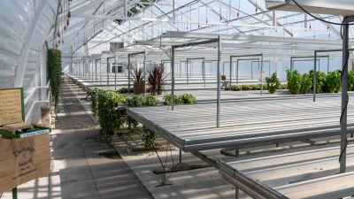 Ett näst intill tomt växthus