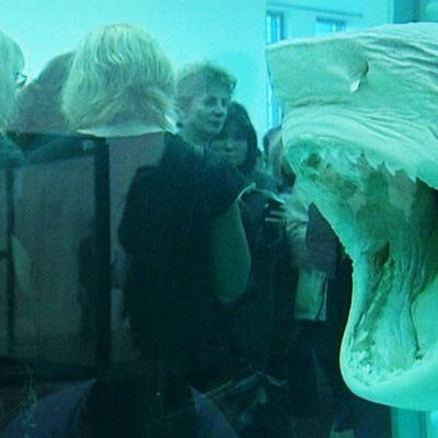 Hain pää akvaariossa, taustalla ihmisiä.