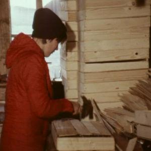 Nainen pakkaa savusilakoita puulaatikoihin