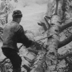 Metsuri karsii puuta vuonna 1964.