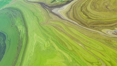 En grötig massa av cyanobakterier bildar ett vackert mönster i den ukrainska floden Dnepr.