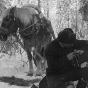 Metsurii korjaa moottorisahaa, taustalla hevonen.