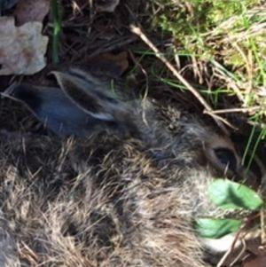 En död harunge med illa sargad bakkropp.