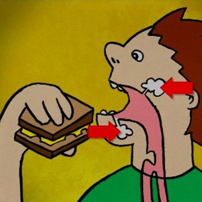 Smörgåsens väg genom matsmältningen.