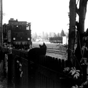 Kissa istuu juna-aseman aidalla