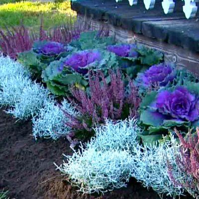 Plantering av lökväxter