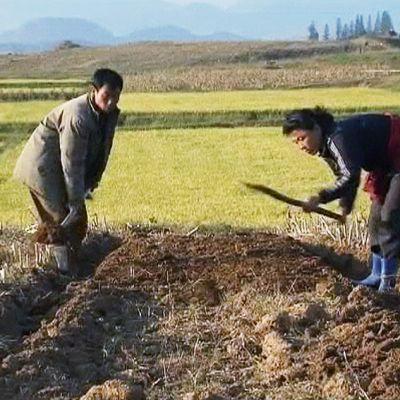 Mies ja nainen kuokkivat peltoa.