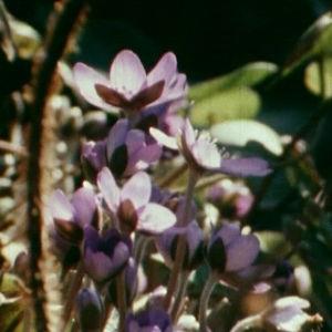 Kukkia metsässä