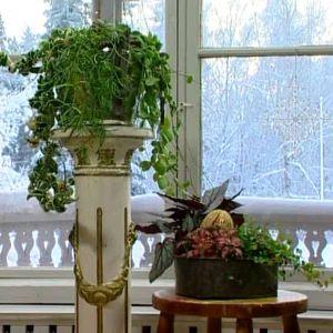 Samplantering av grönväxter