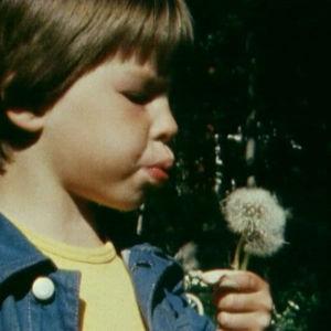 Poika puhaltaa päivänkakkaran siemeniä
