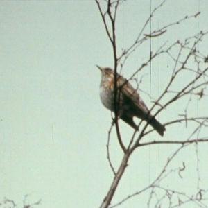 Lintu puun oksalla