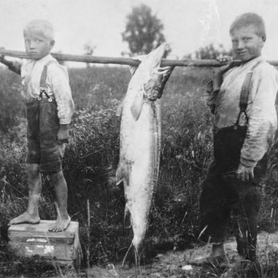 Iivo (vas.), Boris ja ennätyslohi Muhoksella vuonna 1928. Poikien isä, Homa Kotkansalo, sai Oulujoesta nuottaansa 32,6 kilon painoisen lohen. Kuva: Martti Kesäniemi / Kaleva / JOKA / Museovirasto
