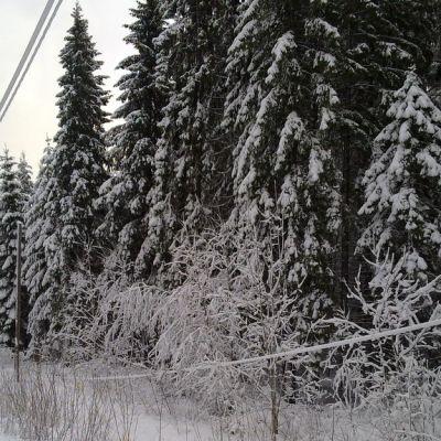 Luminen tienvarsi ja kaatunut sähkölinja Varkaudessa.