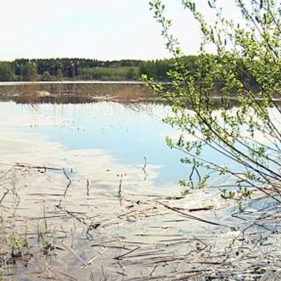 Rehevöitynyt järvi.