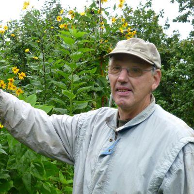 Juhani Paju maa-artisokan kukkien keskellä