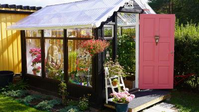Ett litet växthus för hobbyodling i en grönskande trädgård. Växthuset har en rosa spegeldörr som står öppen på vid gavel.