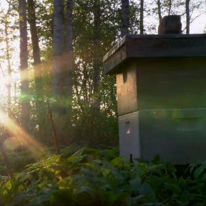 ett bisamhälle i solnedgång