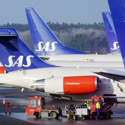 Grupp av SAS flygplan