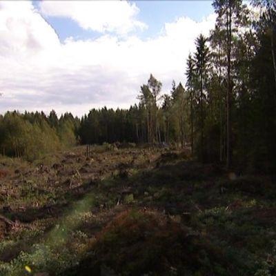 Skyvlad skogsmark