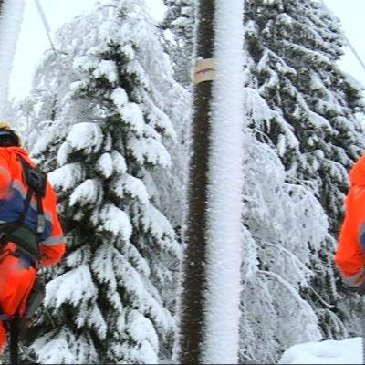 Tung snö fällde träd över elledningarna i Savolax i januari 2015.