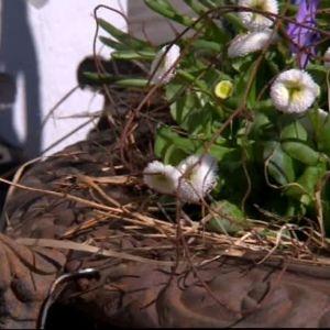 Krukorna har fått nya blommor.